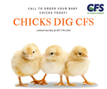 Contact Sue to Order your Chicks Today!